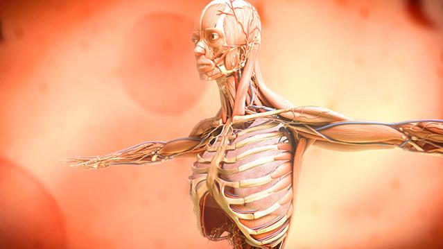 3D Medical Asthma Animation