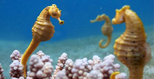 3D SeaHorse composition
