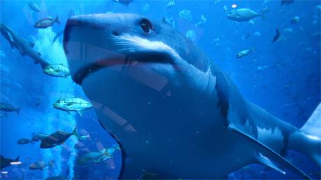 3D Shark animation and VFX