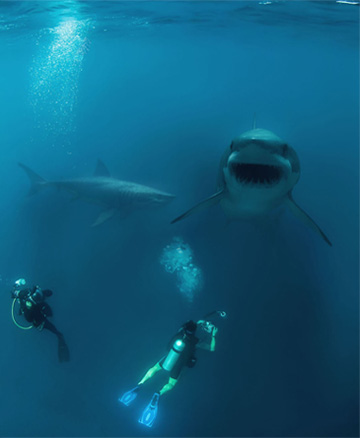 3D Shark Composition